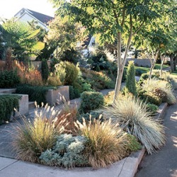 Garden Landscape Design Services We Are A Complete Build Company Serving The Greater San Francisco Bay Area Specialize In Sustainable Low